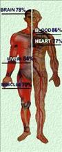 víztisztítás - emberi test